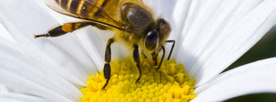 Image for Bee inspired